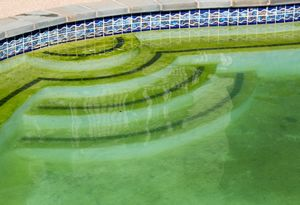 Algae in the swimming pools at the hotel causing illness