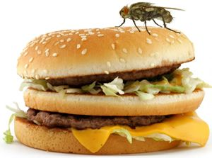 Holiday food Poisoning complaints - flies on food