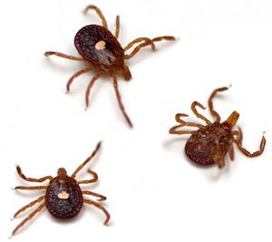 Lyme disease Holiday complaints